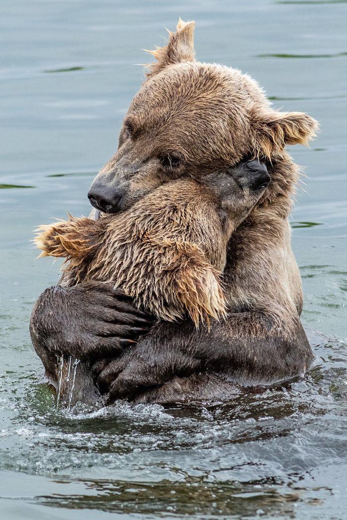 Медвежьи объятия