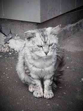 Как домашние коты становятся бездомными (семейка котиков)