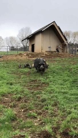 Большая мамочка на прогулке