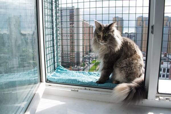 Балкон для кота - прошу совета