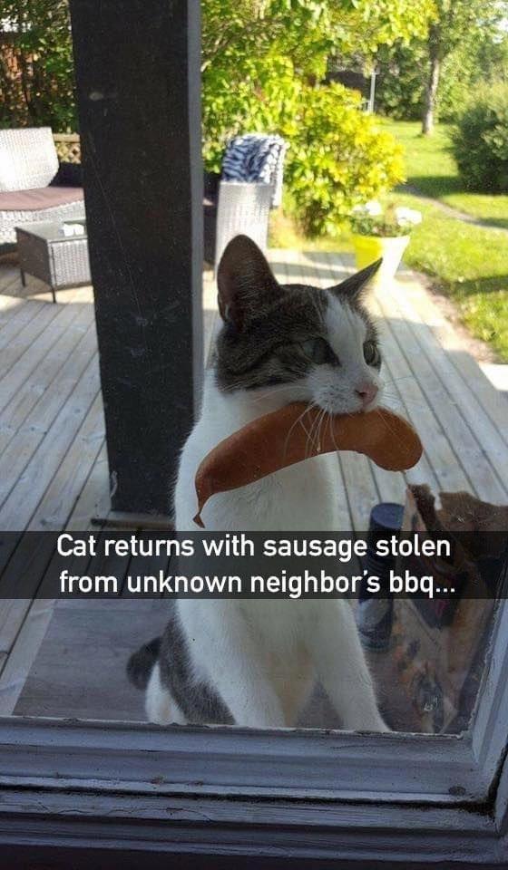 Кот вернулся с сосиской украденной с мангала неизвестных соседей