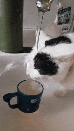 Верно, мой кот не самый умный