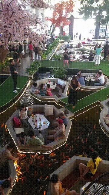 Интересный ресторан во Вьетнаме Ресторан, Вьетнам, Рыба, Аквариум, Красота, Аквариумные рыбки, Азиаты, Гифка, Видео