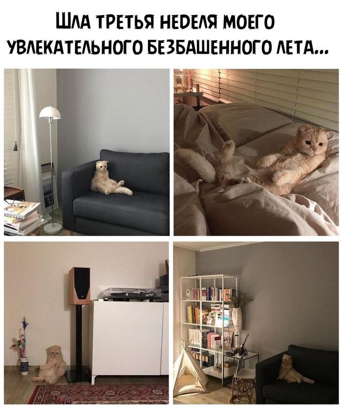 Кот умеет развлечь скучающих хозяев...