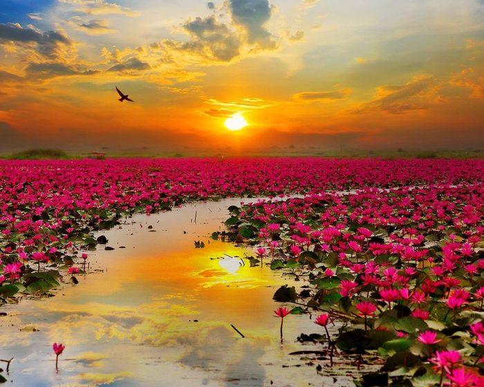 Закат, цветы, река