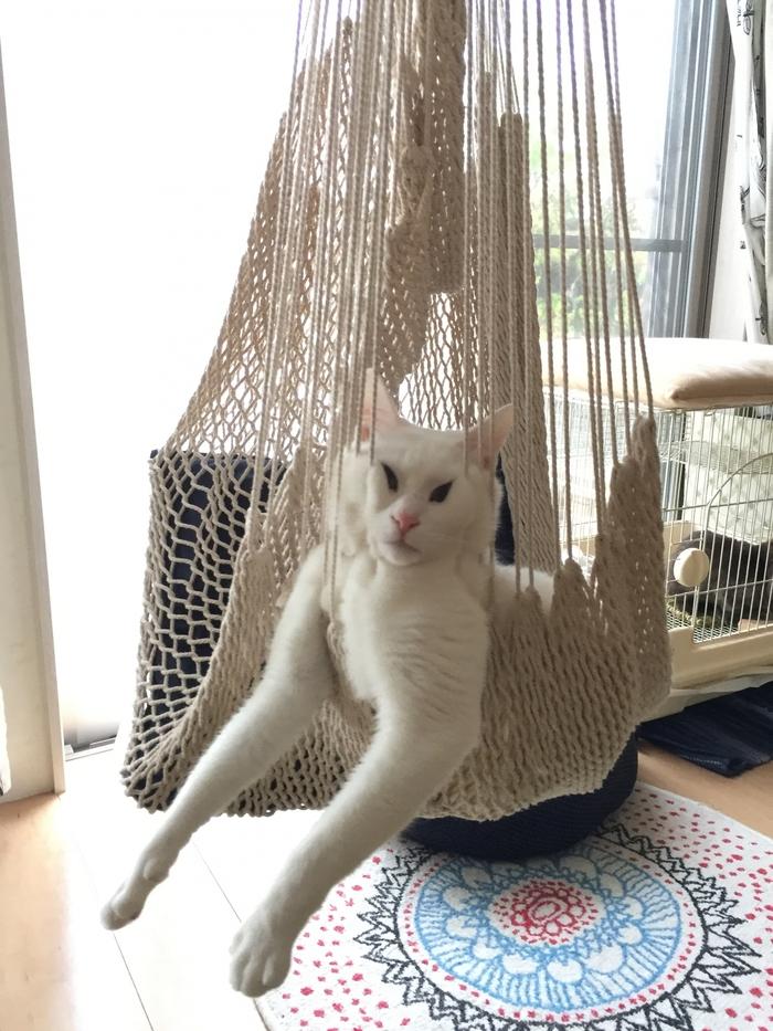 Полчаса искали кота