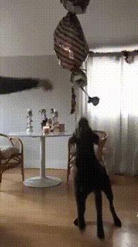 Лучший сюрприз на День рождения любимой собаки