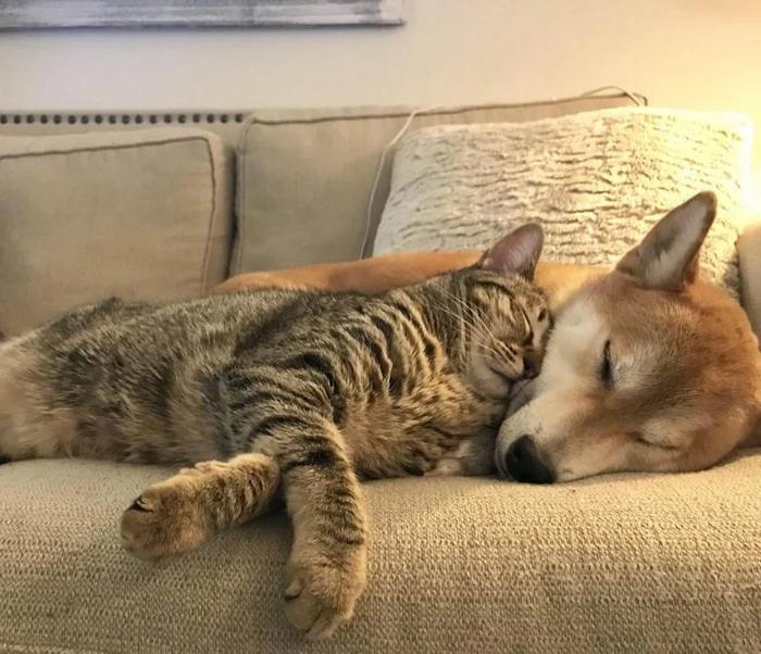 Живут и спят как кошка с собакой