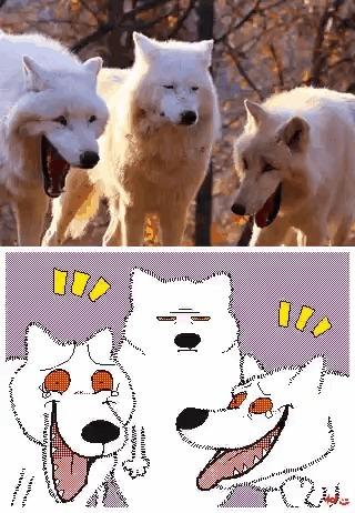 Волки k-Eke, Keke, Волк, Арт, Гифка