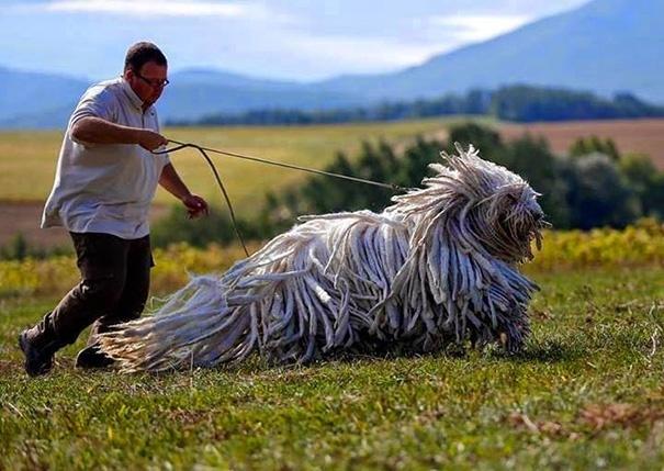 Большие добрые собаки
