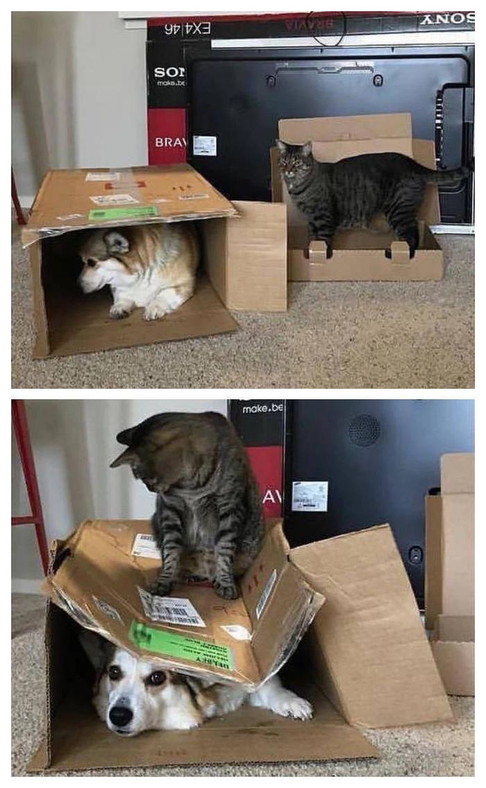 Потому что не фиг чужие коробки занимать