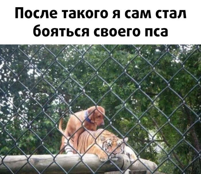 Это любовь:)