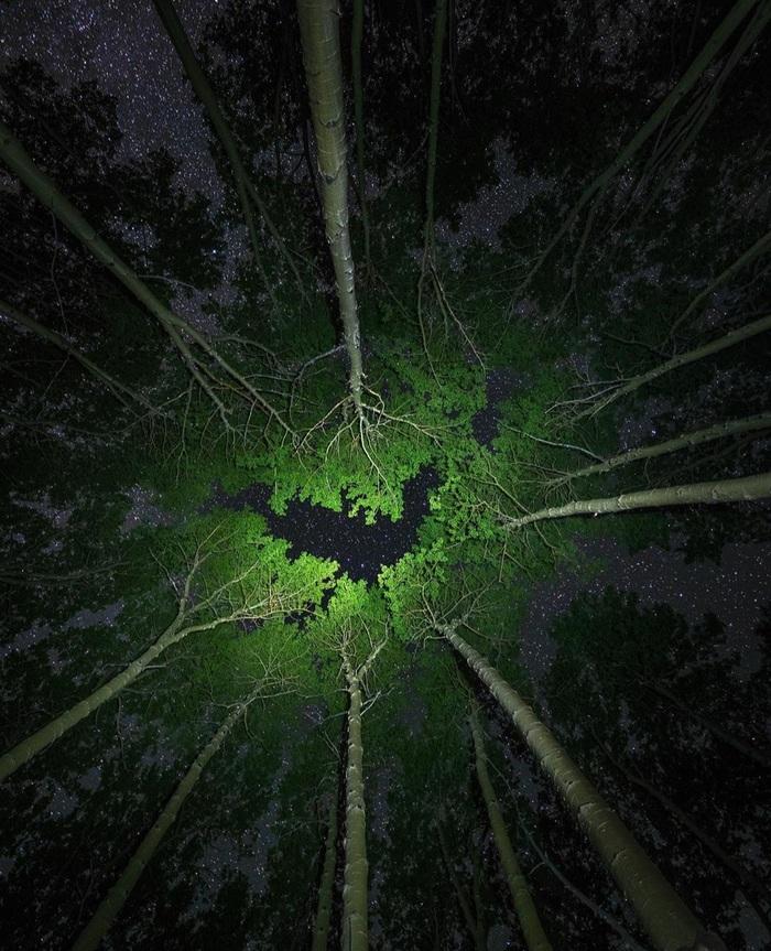 Звезды, лес