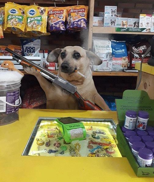 PS Battle: смущённый песик-продавец за прилавком магазина Фотография, Животные, Собака, Photoshop, Мемы, Продавец, Юмор, Reddit, Гифка, Длиннопост