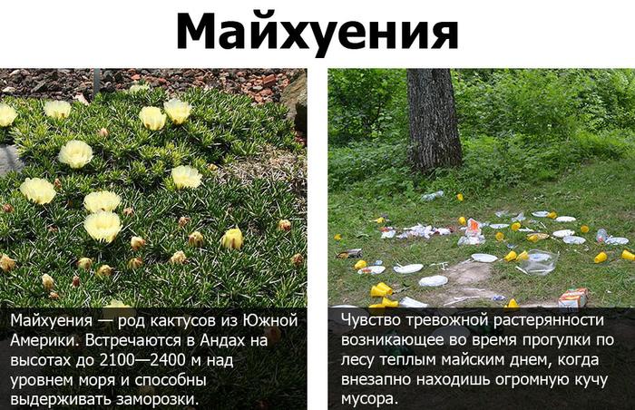 Быстрый урок русского языка