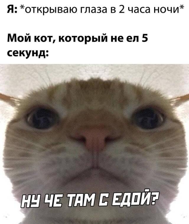 Котейку жалко ...