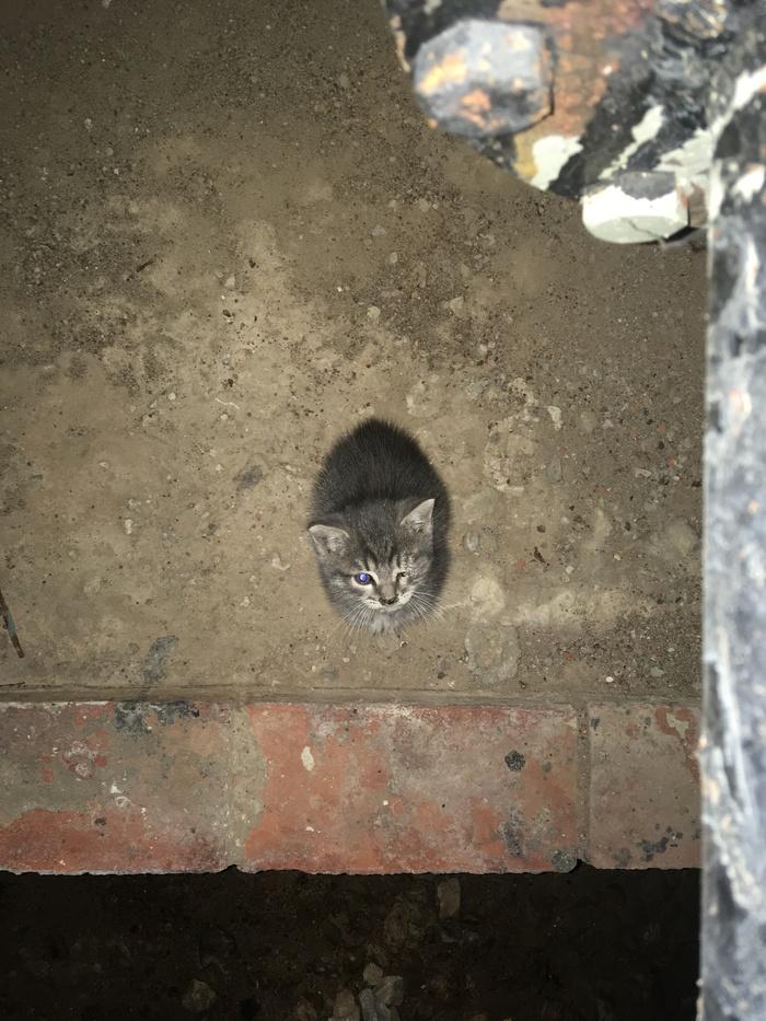 Спасение рядового Барсика (ищу дом котику (Москва))
