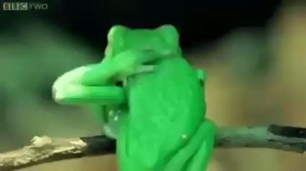 Почесушки от лягушки