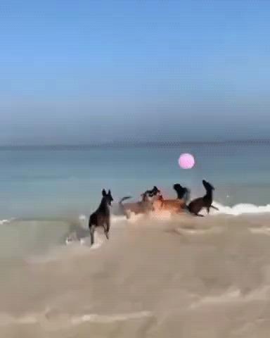 Шарики и играют с шариком