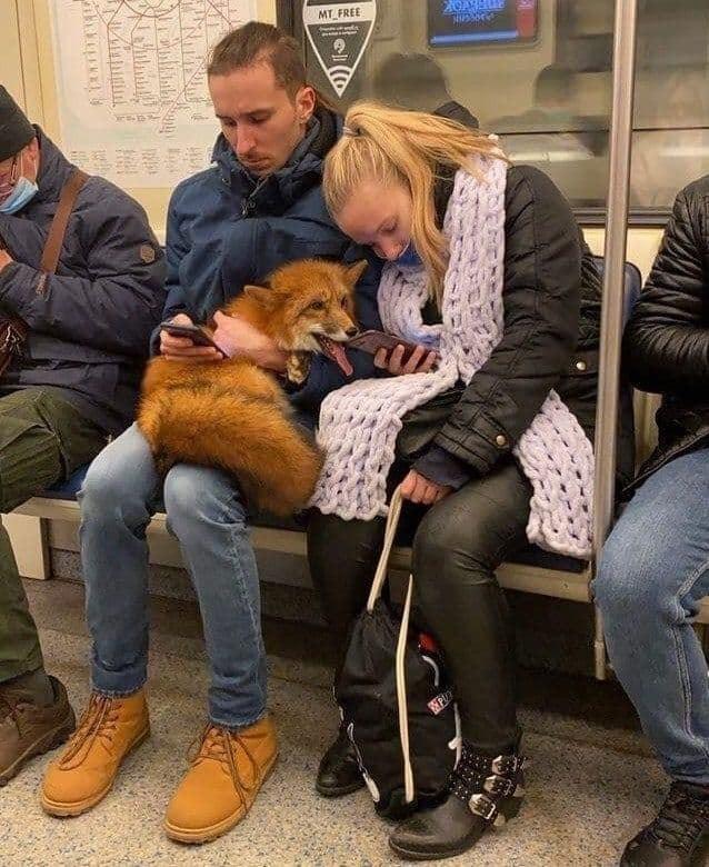 МММ: милота в московском метро)