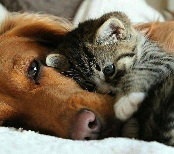 Хорошая собака должна быть теплой и мягкой