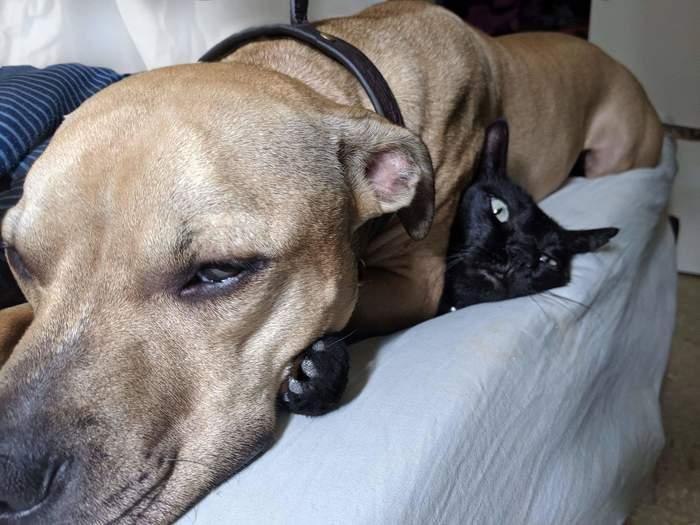 """""""Если что-то достаточно мягкое, значит это будет моей подушкой"""""""
