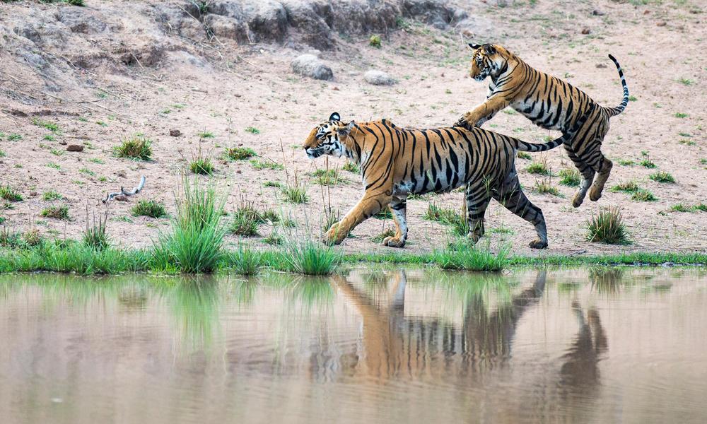 Жвоныи люди секс тигр