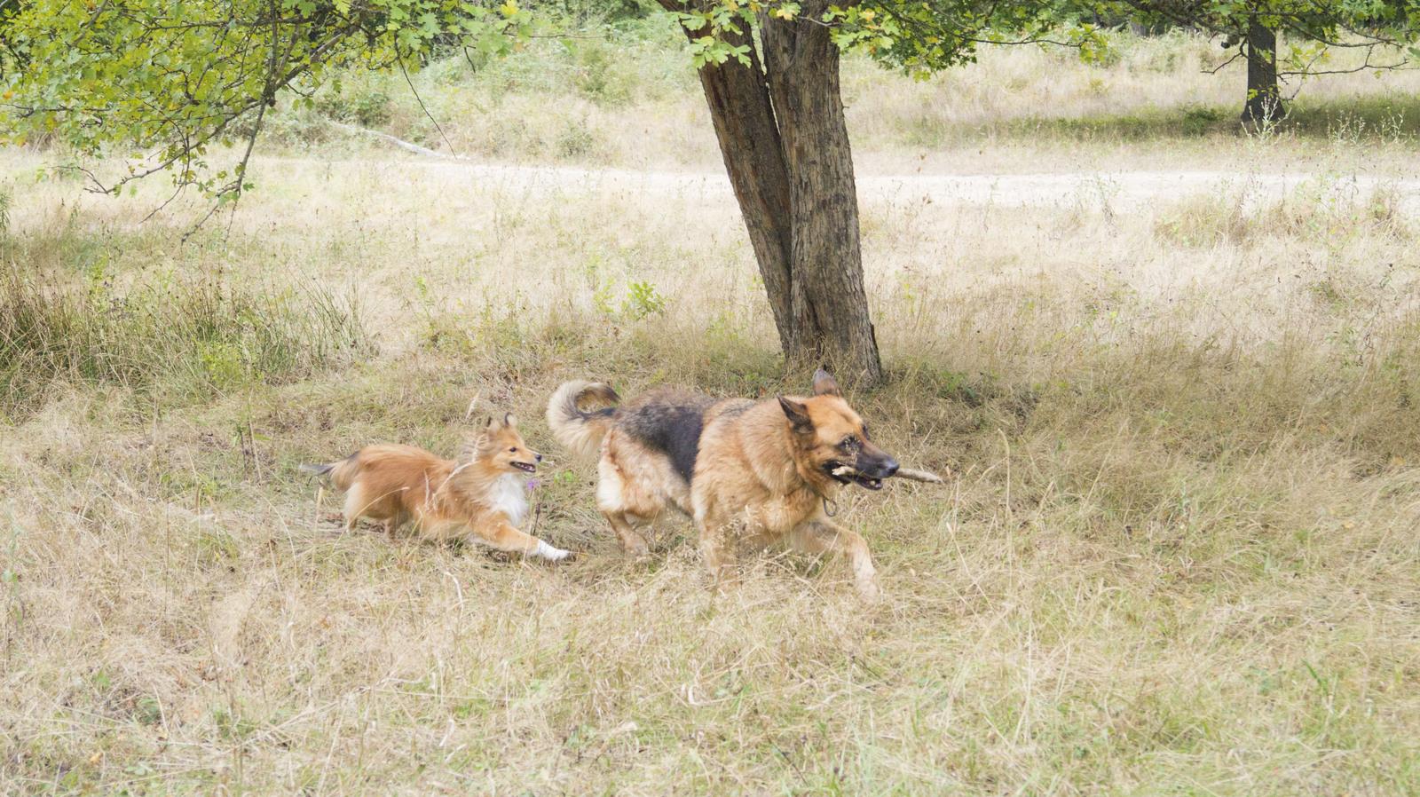 Самая крупная собака в мире скончалась в США - РИА Новости, 25.10.2013 | 898x1600