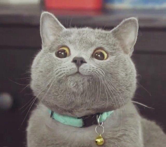 Удивление коты картинки