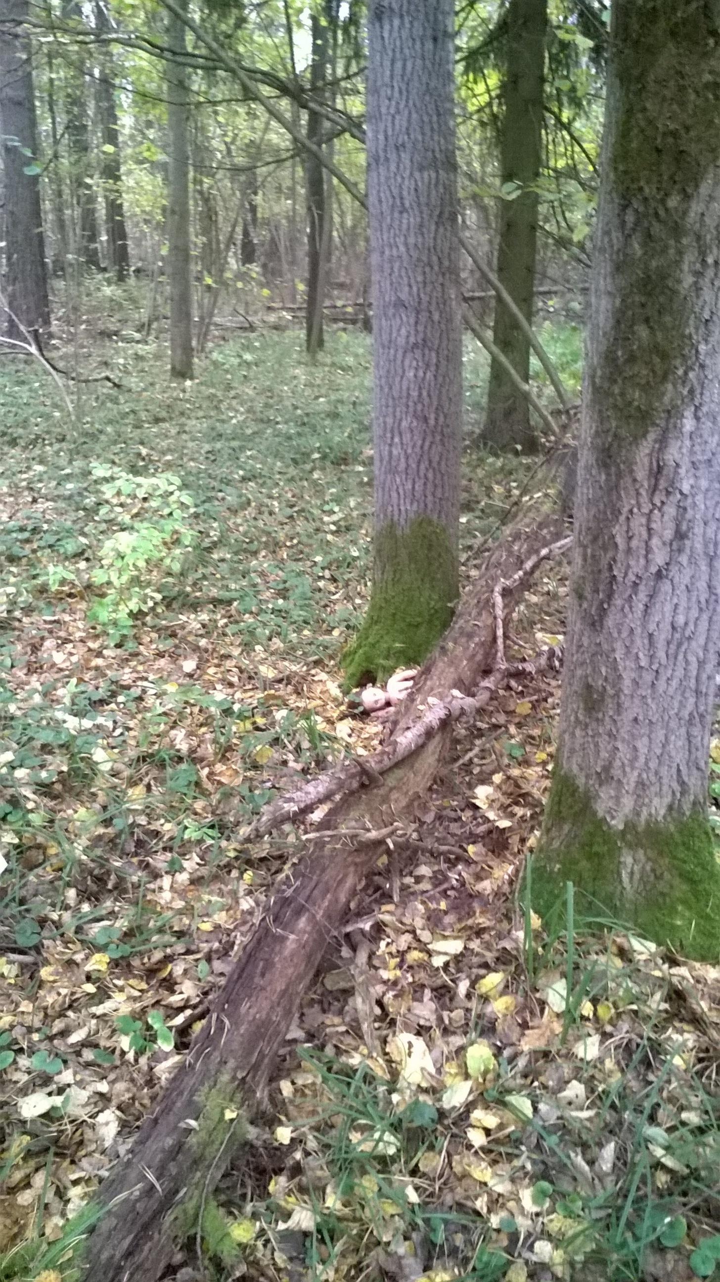 Молодые пошли в лес погулять — img 14