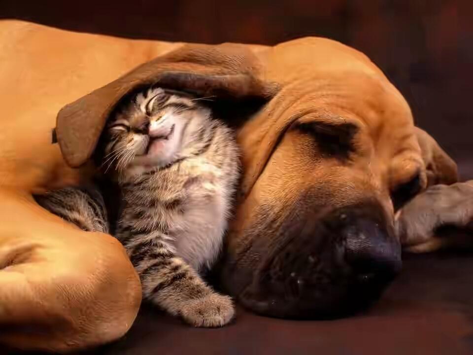 Картинки по запросу кошки и собаки картинки