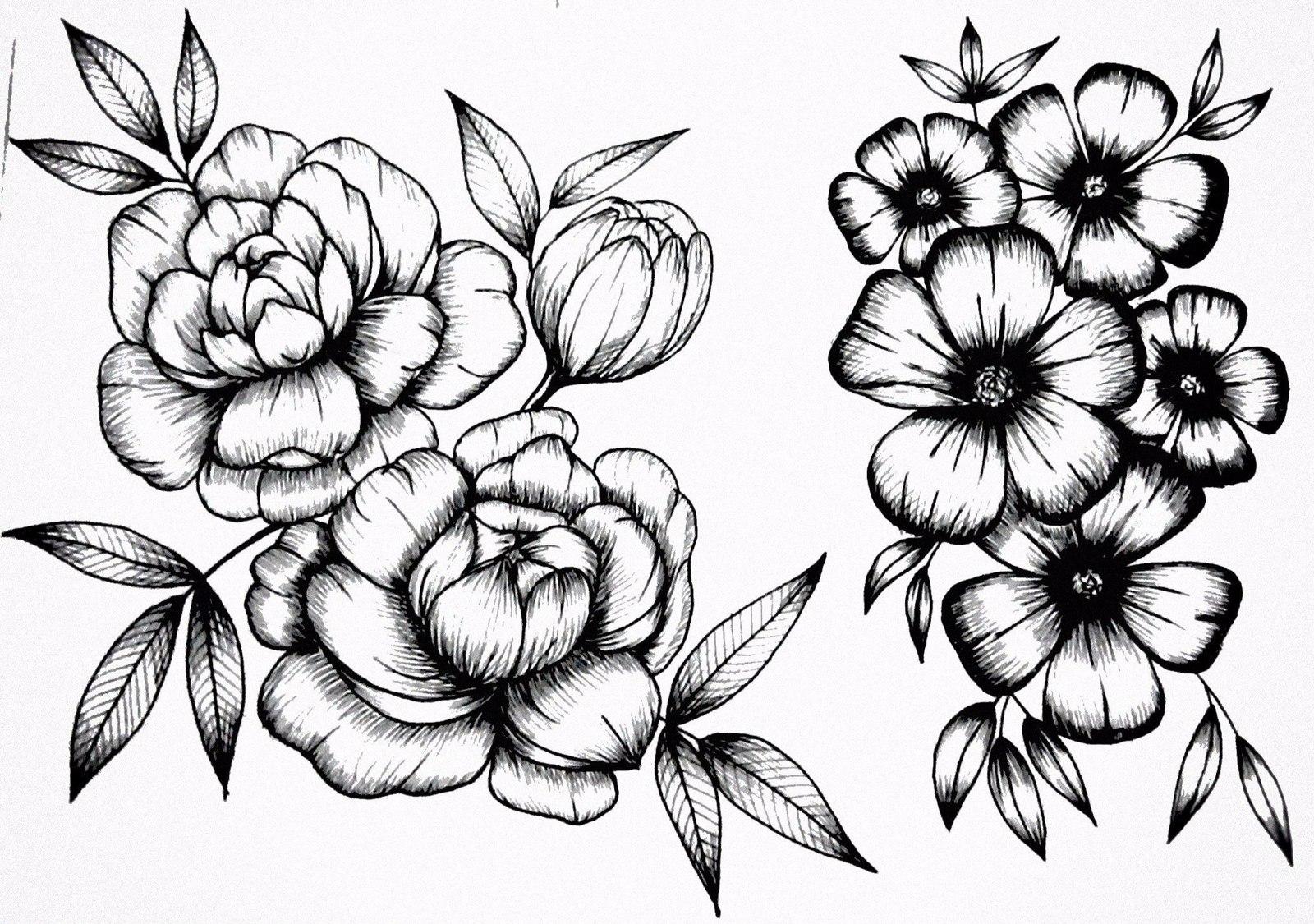 Рисунок цветок ромашки