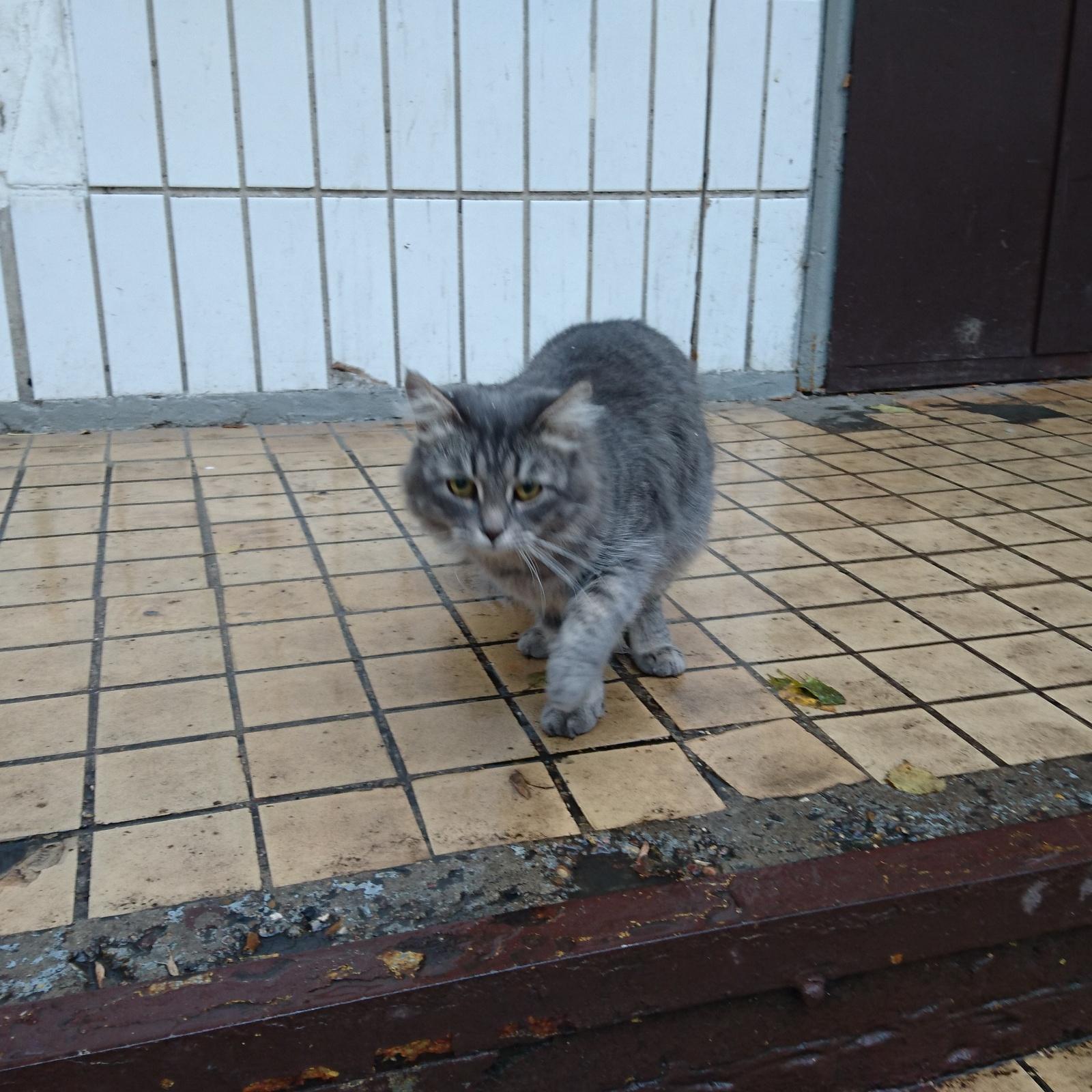 7 котов москва