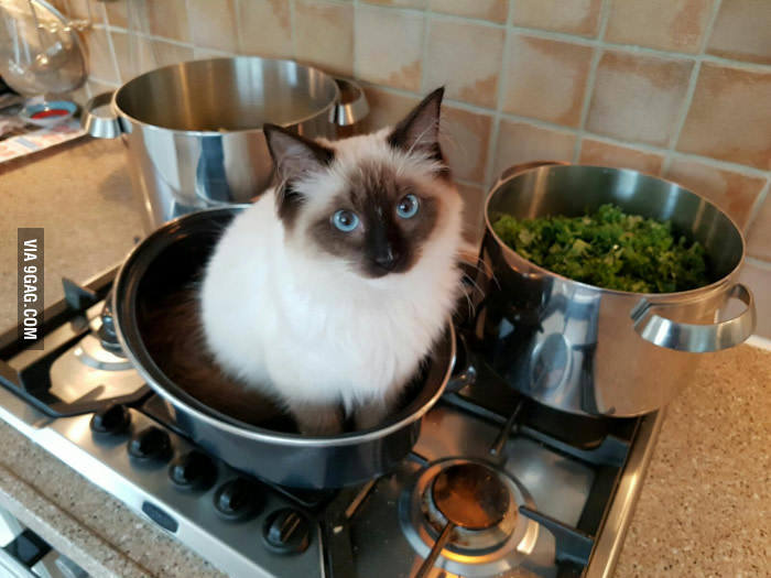 рецепты супа с котом и пирожков с котятами
