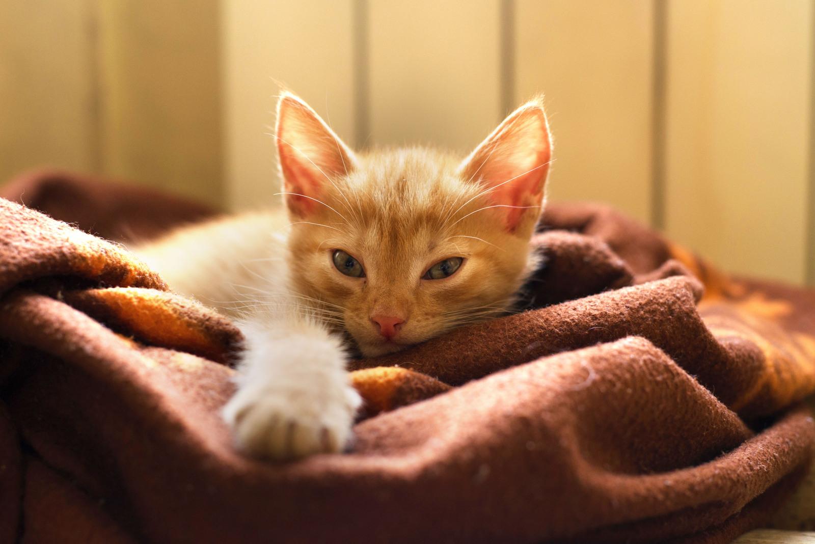 К коту как к члену семьи