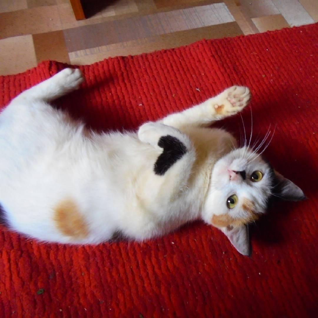 Фото необычный кот