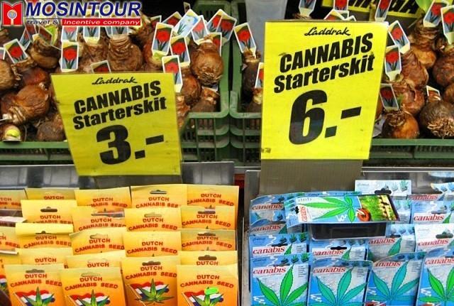 Голландия и марихуана марихуана листья скручиваются листья