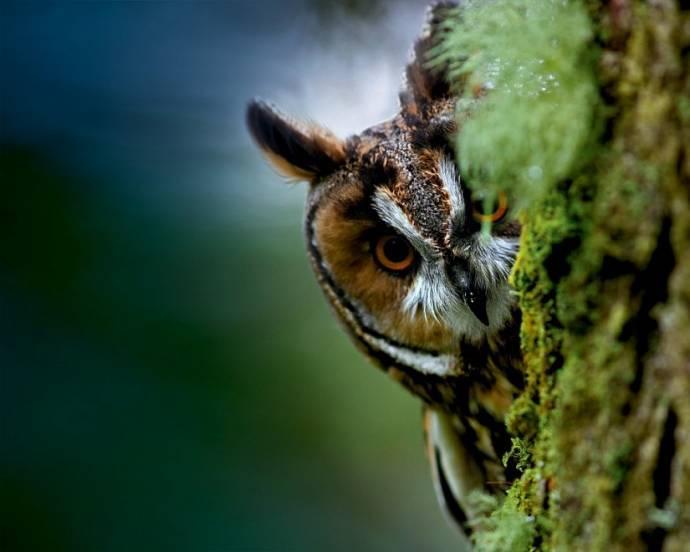 Картинки по запросу совы