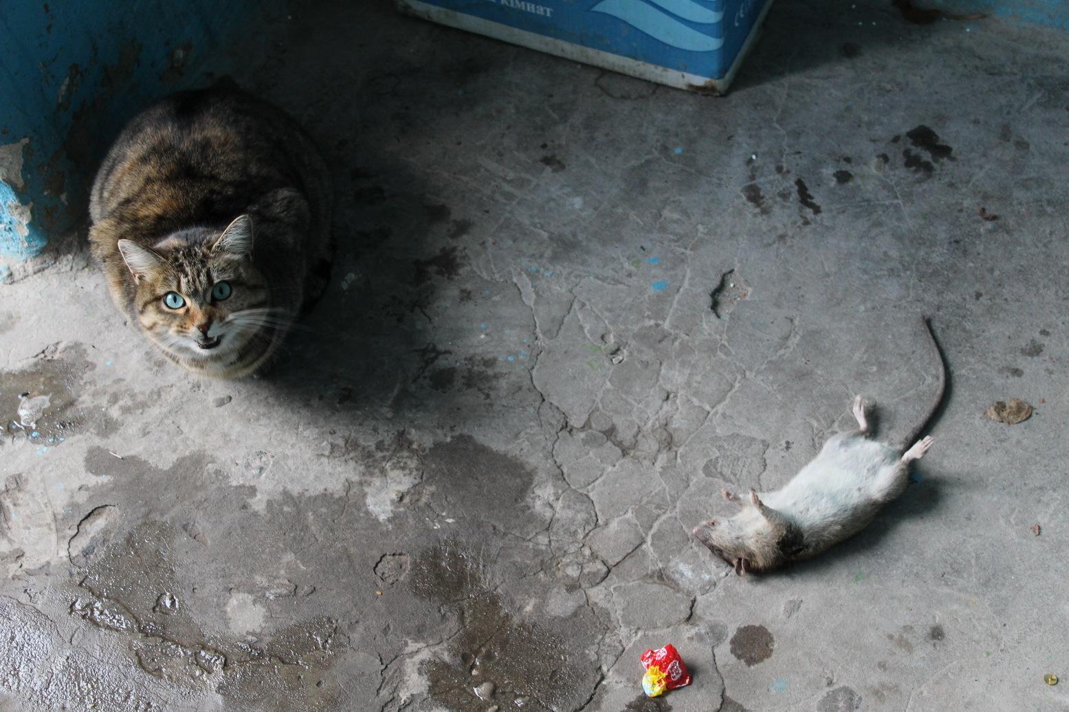Соседи убили моего кота