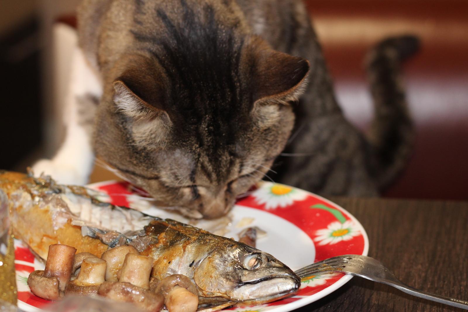 рецепт рыбных кот