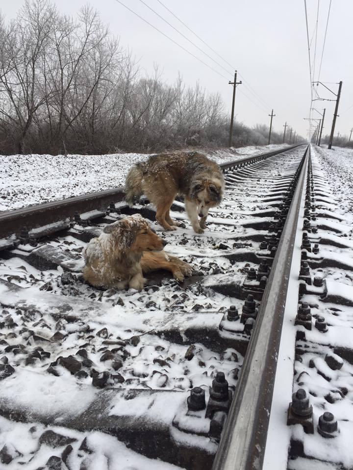 Собачья преданность: трогательные фото животных, помогающих людям в 2019 году