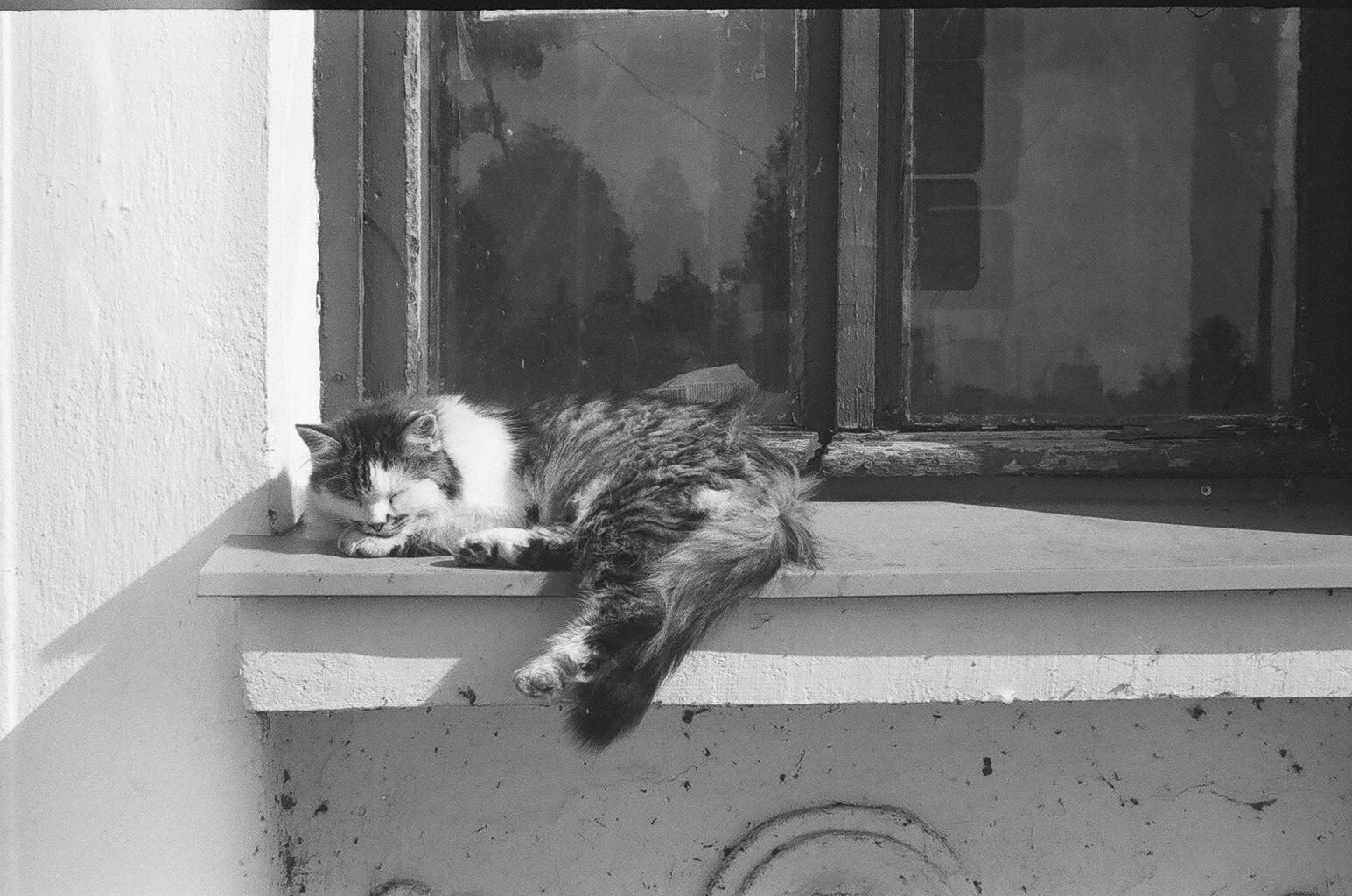 Черный кот сокол