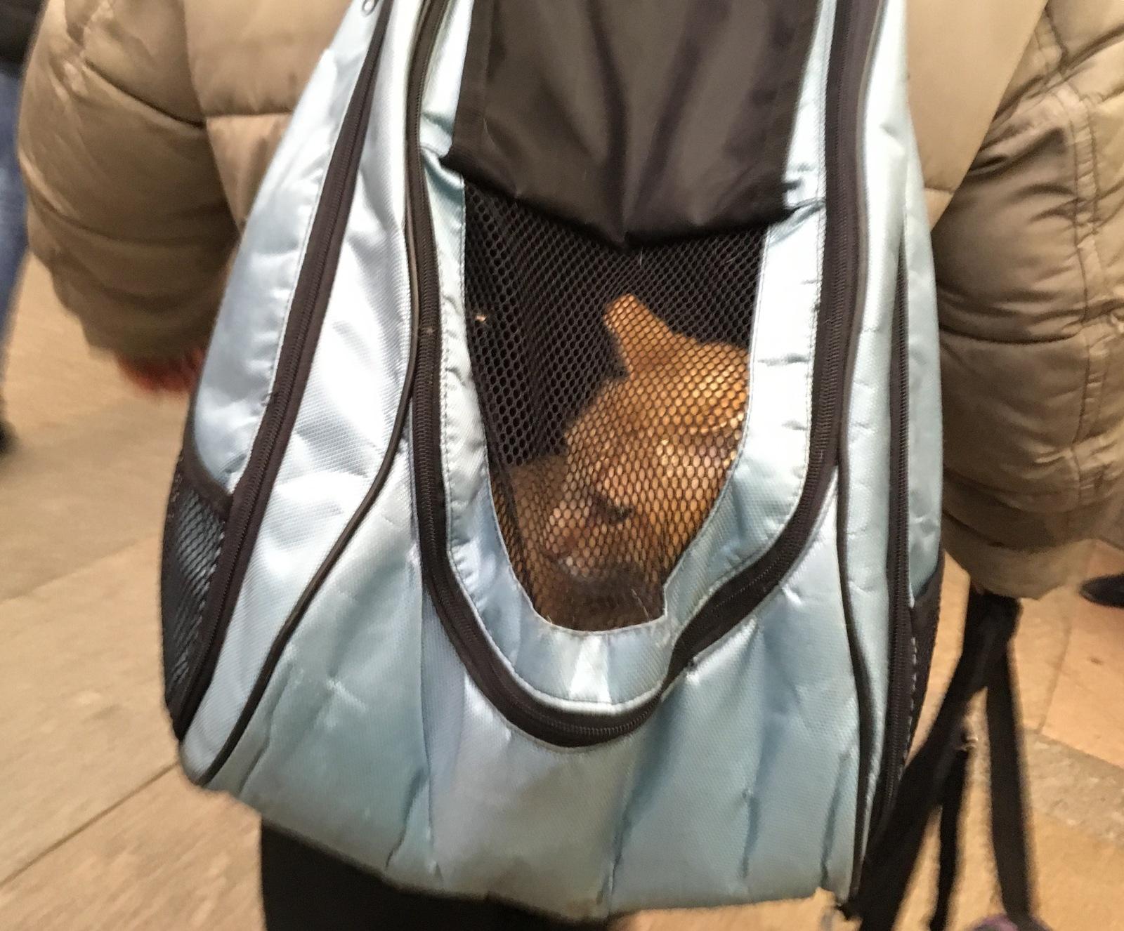 Кот в рюкзаке купить рюкзак фирмы экспедиция
