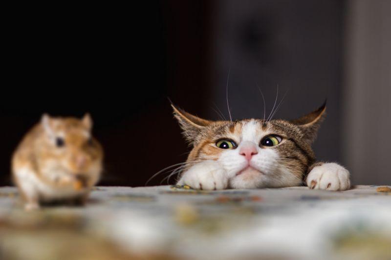 кошка с мышкой картинки