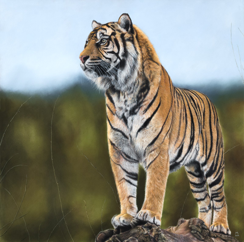 Картинки по запросу тигр