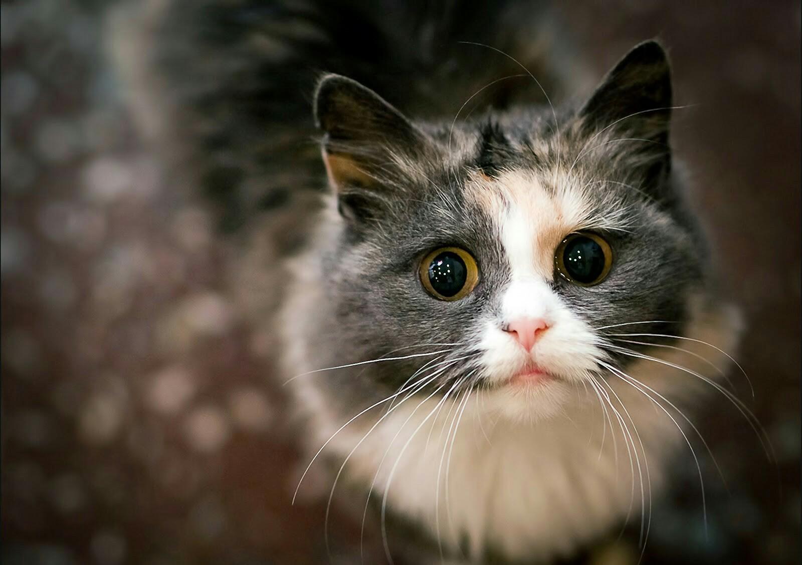 Сексуальное поведение кота