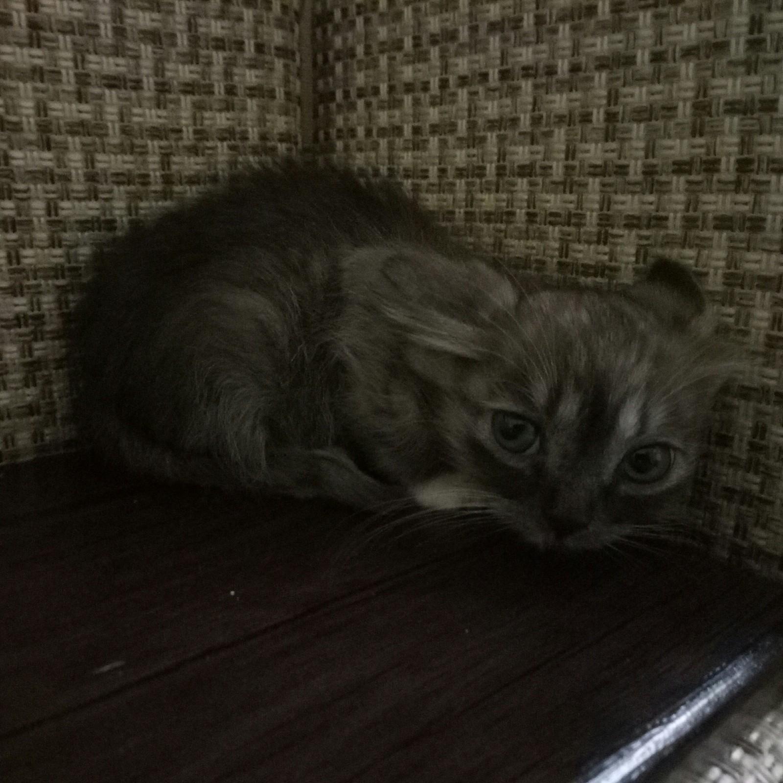 Кот сказал свое имя