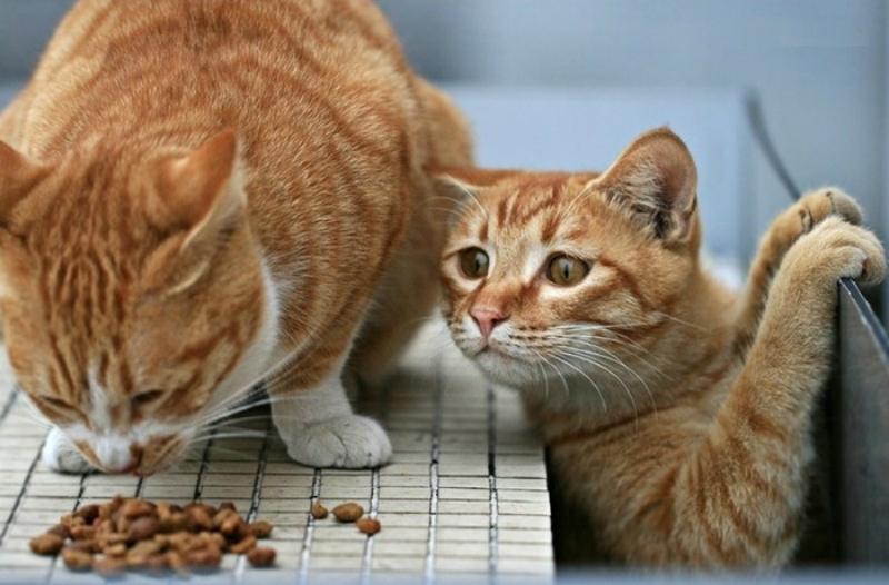 Корм для кошек своими руками рецепты 243