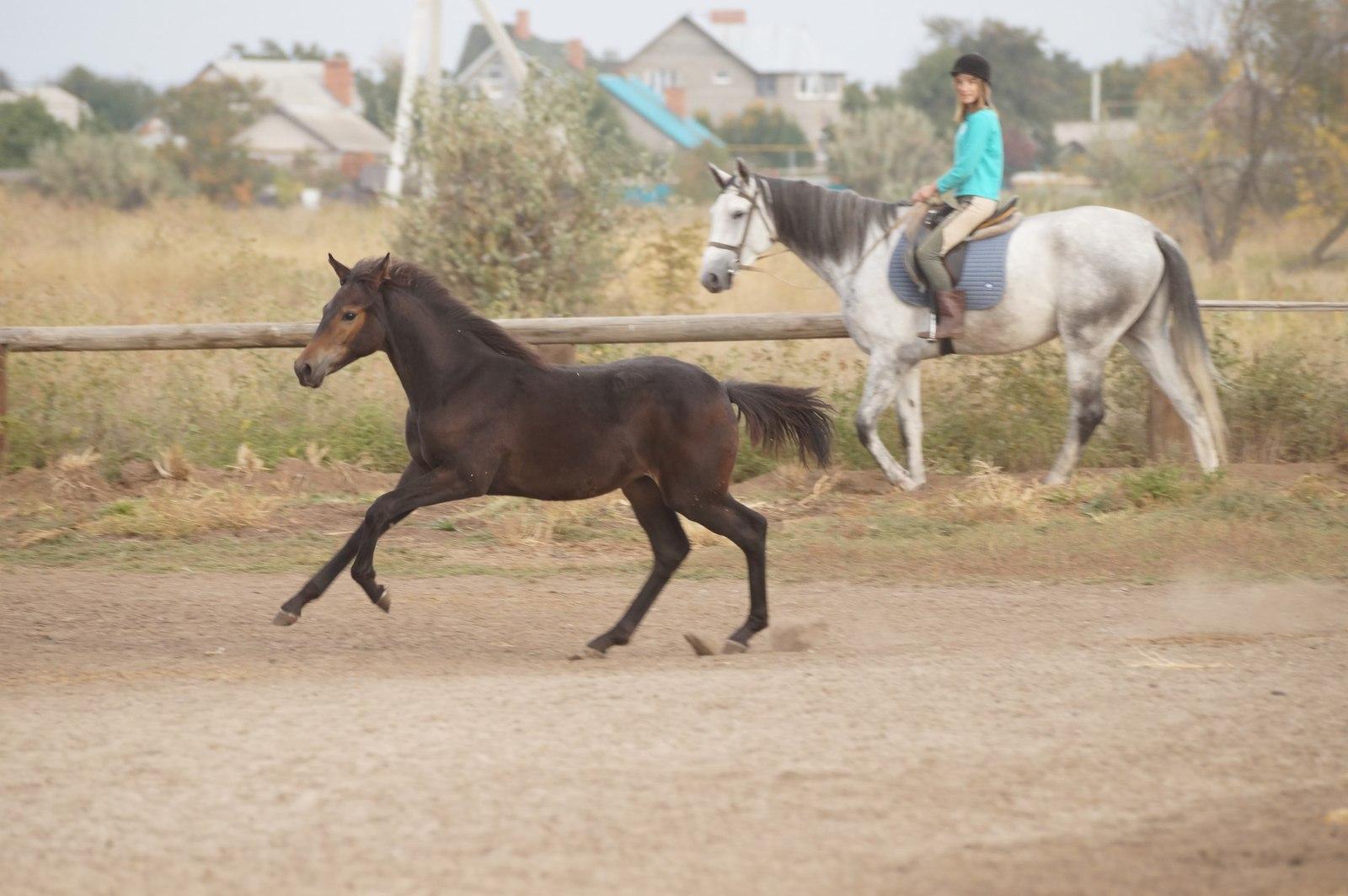 Картинки по запросу конь и дети фото