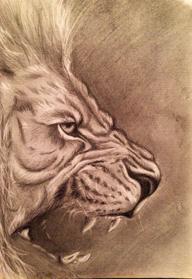 картинка льва карандашом